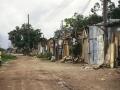 favela-lirio